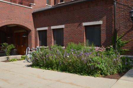 Rain Garden by Brick Building